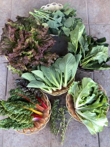 旬野菜セット「春色」一例