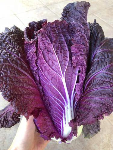 紫サラダ白菜
