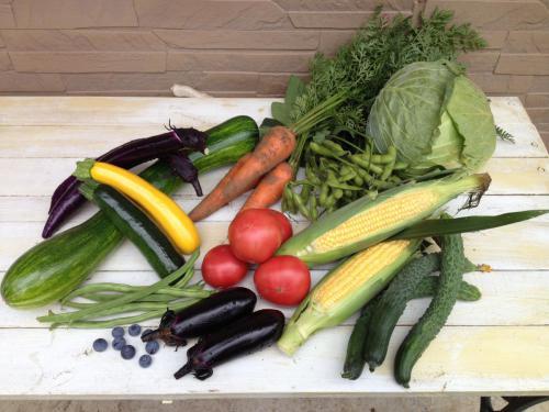夏野菜いろいろ